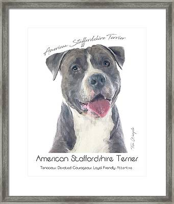 American Staffordshire Terrier Poster 2 Framed Print by Tim Wemple