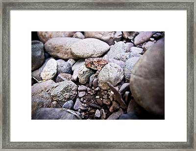 American Toad Framed Print by Ryan Kelly