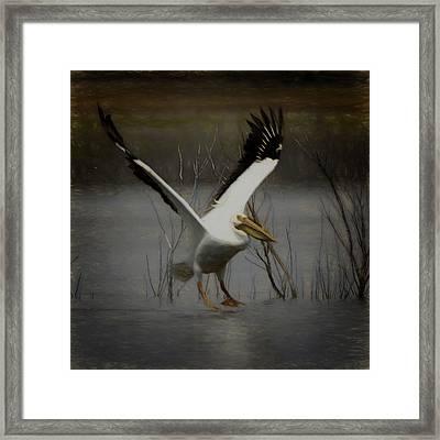American White Pelican Da Square Framed Print by Ernie Echols