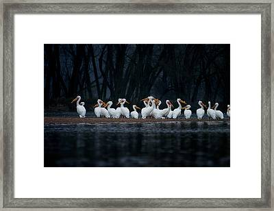 Framed Print featuring the photograph American White Pelican by Jane Melgaard