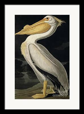 John James Audubon Framed Prints