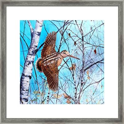American Woodcock Framed Print by Joe Rizzo