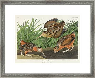 American Woodcock Framed Print by John James