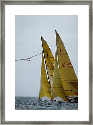 America's Cup Race Framed Print by Carl Purcell