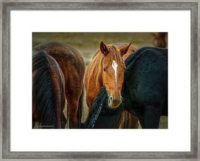 Americas Wild Horses Framed Print