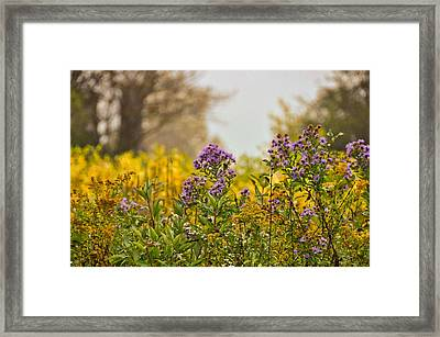 Amethyst And Golden Rod Framed Print by JAMART Photography