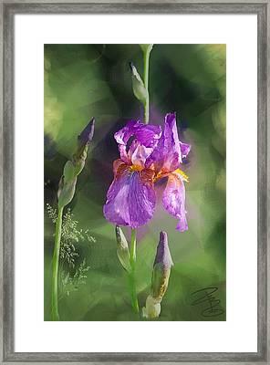 Amethyst Iris 2 Framed Print
