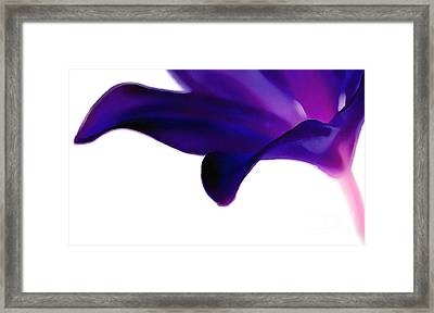 Amethyst Lily Framed Print