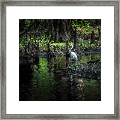 Amidst The Knees Framed Print by Marvin Spates