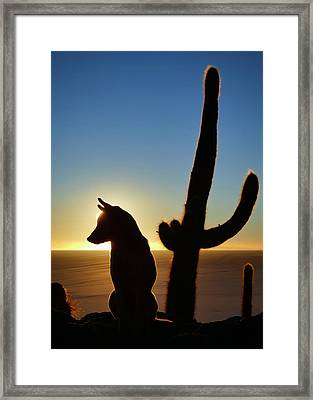 Amigo Framed Print by Skip Hunt