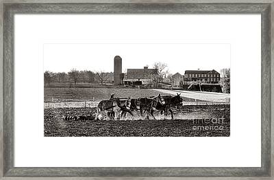 Amish Agriculture  Framed Print