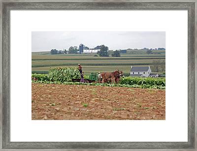 Amish Farm Harvest Framed Print by Joyce Huhra
