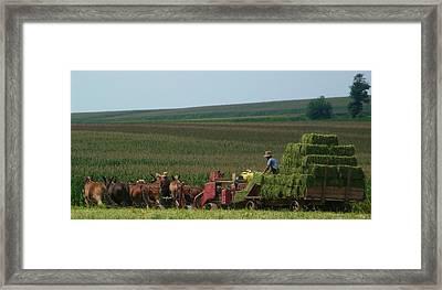 Amish Farm Framed Print by Lori Seaman