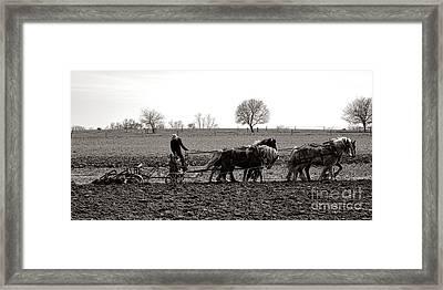 Amish Farming Framed Print by Olivier Le Queinec