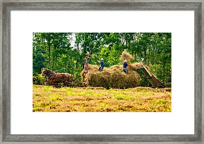 Amish Harvest 2 - Paint Framed Print by Steve Harrington