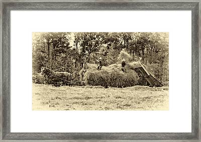 Amish Harvest 2 - Sepia Framed Print by Steve Harrington