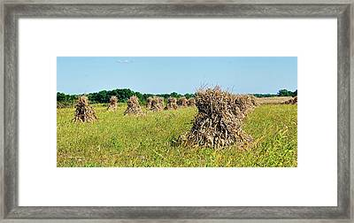 Framed Print featuring the photograph Amish Harvest by Cricket Hackmann