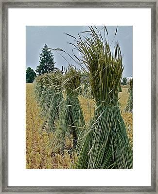 Amish Harvest Framed Print by Diana Hatcher