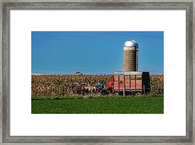Amish Harvest - Indiana Framed Print