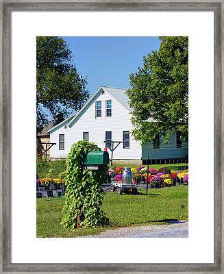 Framed Print featuring the photograph Amish House With Mums by Cricket Hackmann