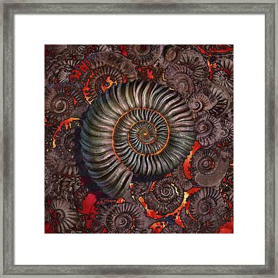 Ammonite 2 Framed Print