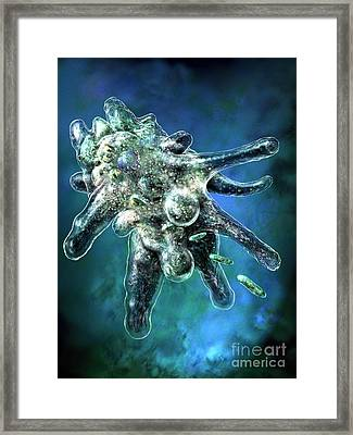 Amoeba Blue Framed Print