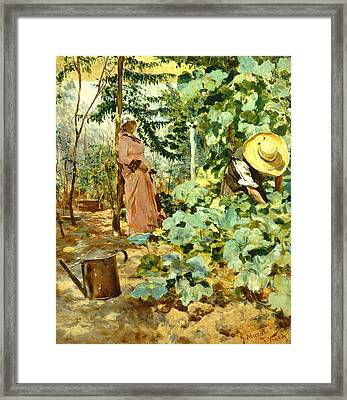 Among Pumpkin Plants Framed Print by Francesco Vinea
