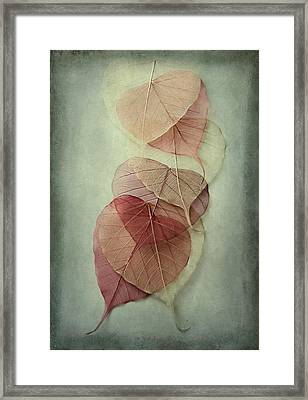 Among Shades Framed Print