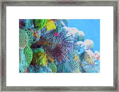 Among The Colors Framed Print