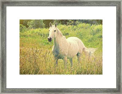 Among The Daisies Framed Print by JAMART Photography