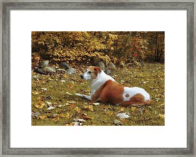 Among The Leaves Framed Print by JAMART Photography