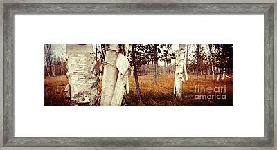 Among The Tall Grass Framed Print