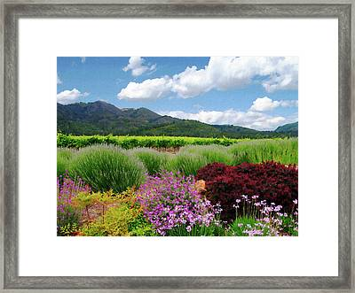 Amongst The Vineyards Framed Print by Kurt Van Wagner