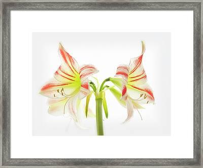 Amorice Framed Print
