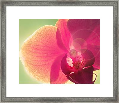 Amoroso Framed Print by Amy Tyler