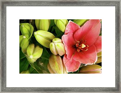 Framed Print featuring the photograph Amsterdam Buds by KG Thienemann