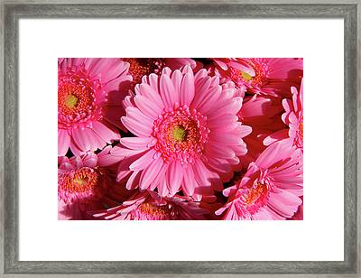 Framed Print featuring the photograph Amsterdam In Pink by KG Thienemann