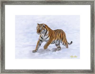 Framed Print featuring the photograph Amur Tiger Running In Snow by Rikk Flohr