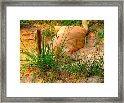 Amy's Cat Framed Print