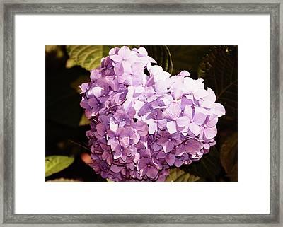 Amethyst Framed Print by JAMART Photography
