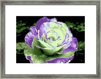 An Abstract Beauty Framed Print