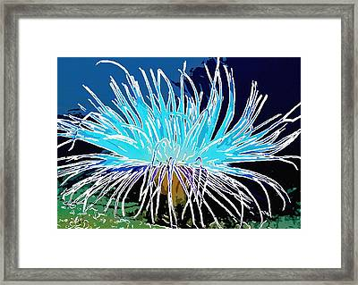 An Abstract Scene Of Sea Anemone 1 Framed Print by Lanjee Chee