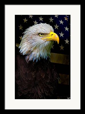 Bald Eagle Digital Art Framed Prints