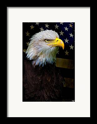 Bald Eagle Framed Prints