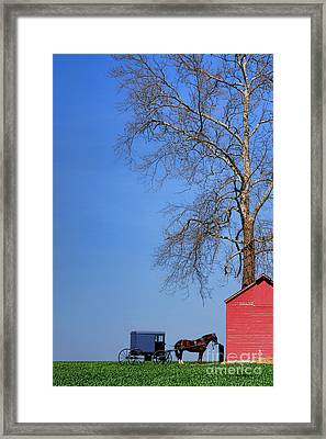 An Amish Scene Framed Print by Olivier Le Queinec