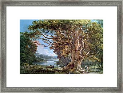 An Ancient Beech Tree Framed Print