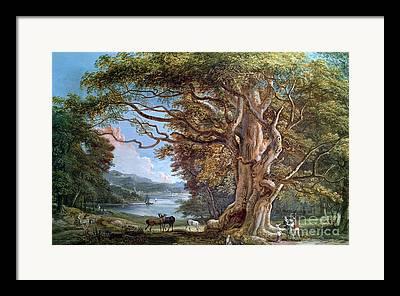 An Ancient Beech Tree Framed Prints