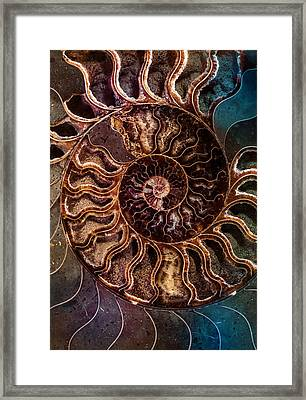 An Ancient Shell Framed Print