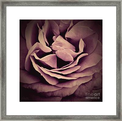 An Angel's Rose Framed Print