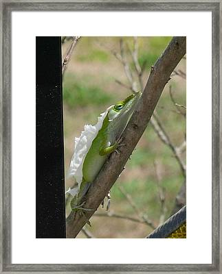 Framed Print featuring the photograph An Anole Shedding Its Skin by Jeanne Kay Juhos